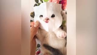 Смешное видео с котами.  Смешные коты. Приколы с кошками.