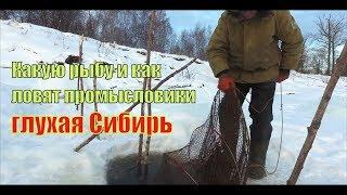 Как ловят промысловики рыбу зимой на Оби | Глухая Сибирь