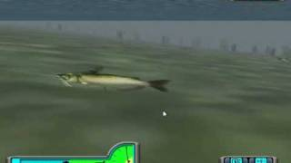 Epic Catfish Fight in Pro Bass Fishing 2003