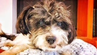 el-perrito-viejo-cojo-y-abandonado-por-todos-que-quiso-ser-feliz