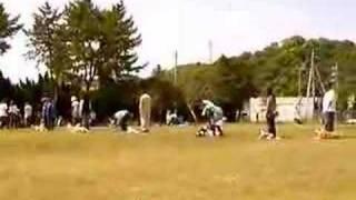 NPO法人K9クラブ主催 わんわんフェスティバル(08年5月6日) ...