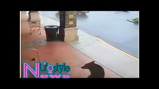 WATCH: Bear makes a stop in a liquor store