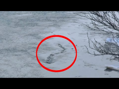 7 Most Strange Unidentified Creatures Ever Caught on tape