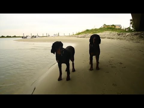 South Carolina Man Trained His Two Hunting Dogs To Catch Fish