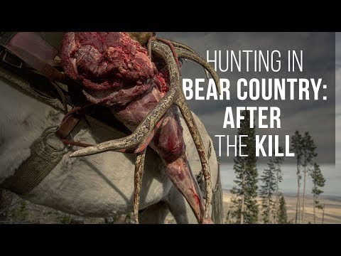 Hunting in Grizzly Bear Country: How to Handle A Carcass After the Kill