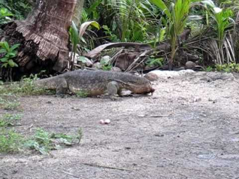 how to get to komodo island from malaysia