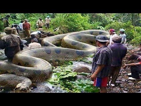 ระวัง! งู 10 ชนิดนี้อันตรายที่สุดในโลก