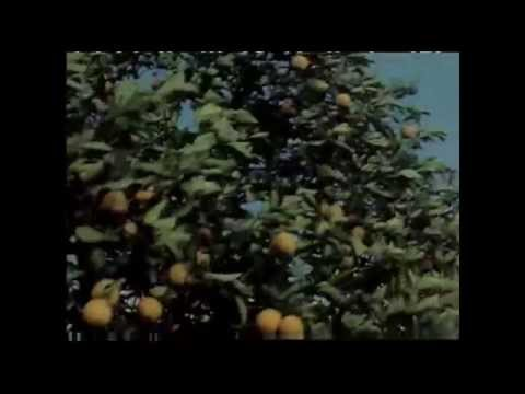 Episode 38: Citrus Industry (A History of Central Florida Series)
