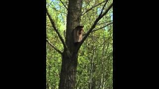 Белка прикол // squirrel
