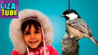 КОРМУШКА для птиц DIY - Как сделать своими руками? Лиза делает кормушки Видео для детей lizatube