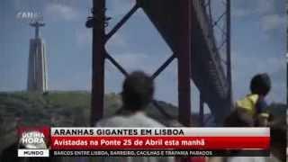 Aranhas gigantes em Portugal - Notícia de Última Hora!
