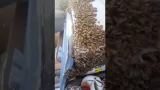 ミツバチ3000匹がトラックを占拠。そのまま64kmの道のりをドライビングした養蜂家、無傷で生還(アメリカ)※蜂大量出演中