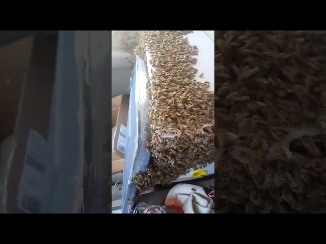 Man Drives With Swarm of Bees in Car