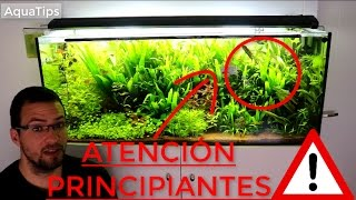 Atención principiante, mira este vídeo antes de comprar tus peces || AquaTips