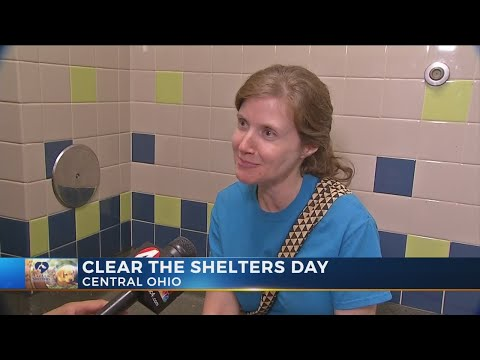 Shelter pets find happy homes during Clear the Shelters