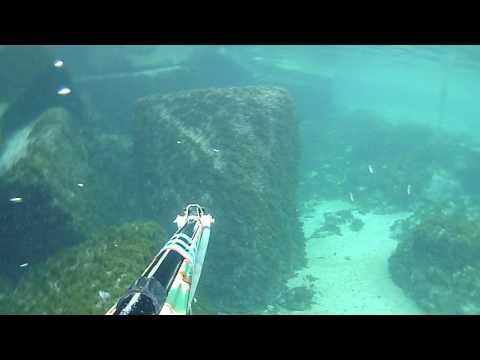 pescasub : come padellare un 'anguilla