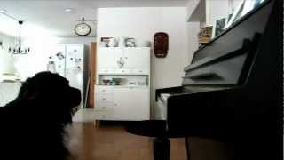 [ FUNNY ] Dog Plays the Piano and Sings
