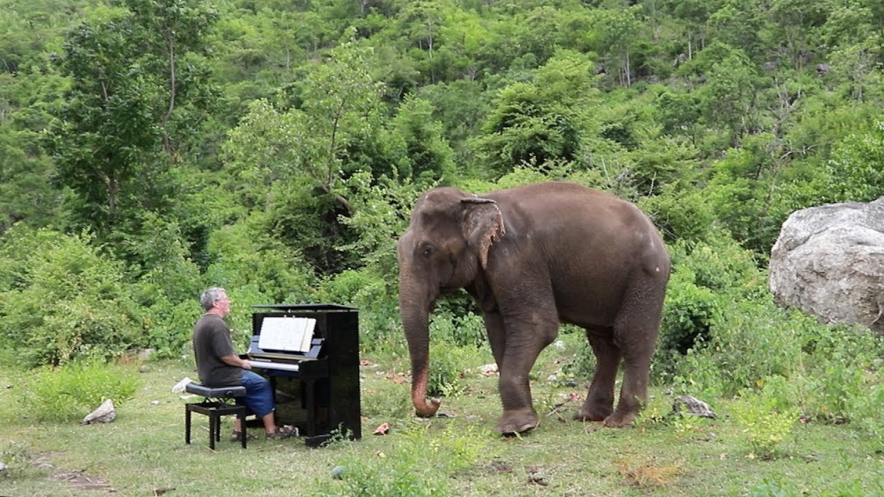 Chopin On Piano For Romsai The Elephant Youtube