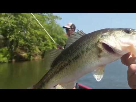 MULTI-SPECIES FISHING On Lake Martin, Alabama. Bass And Catfish