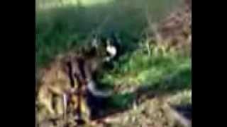 Рубанян Живодер маньяк убивает кошек собак