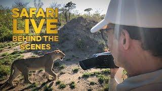 safariLIVE Viewer Experience: Sebastian Zierer thumbnail