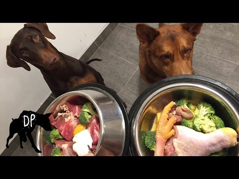 Group raw feeding gone wrong | Raw Feeding Dogs