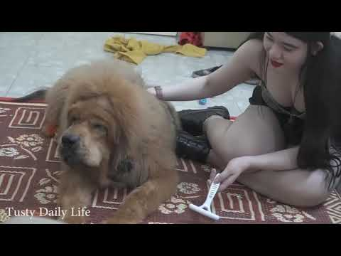 Lovely smart girl Playing Baby Cute Dogs On Rice Fields How to play with dog In Dog Village #22