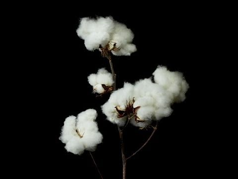 Cotton: The Future of American High Tech?