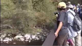 KENYA BRUCE Salmon Run Observer TV News