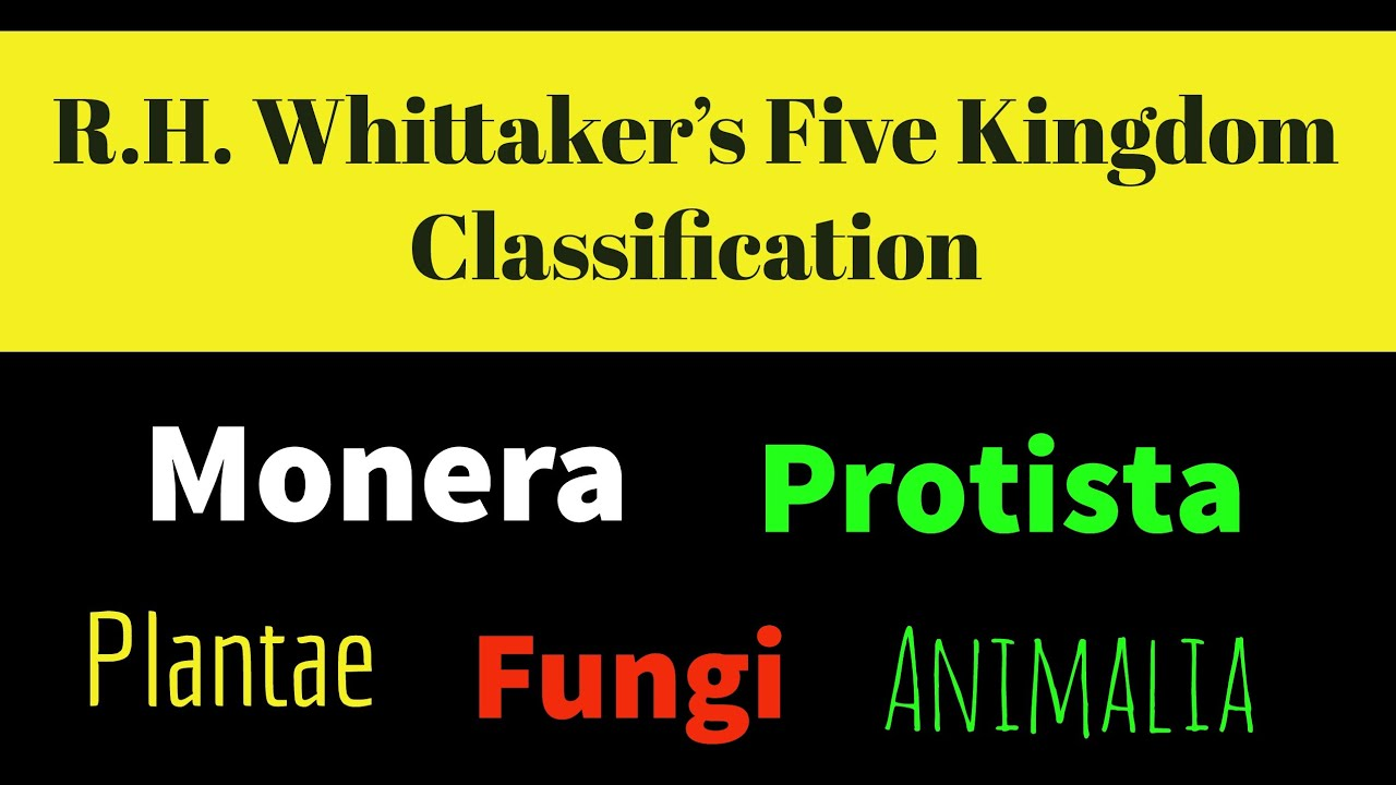 five kingdom system of classification by whittaker