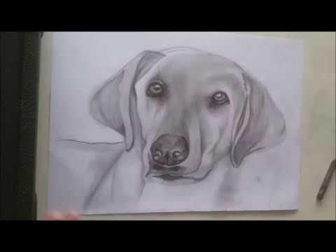 Tutorial Cachorro Realista Youtube