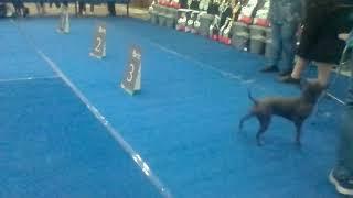 Выставка собак 2