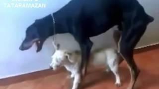 Türklerin Köpekleri ve Kedileri