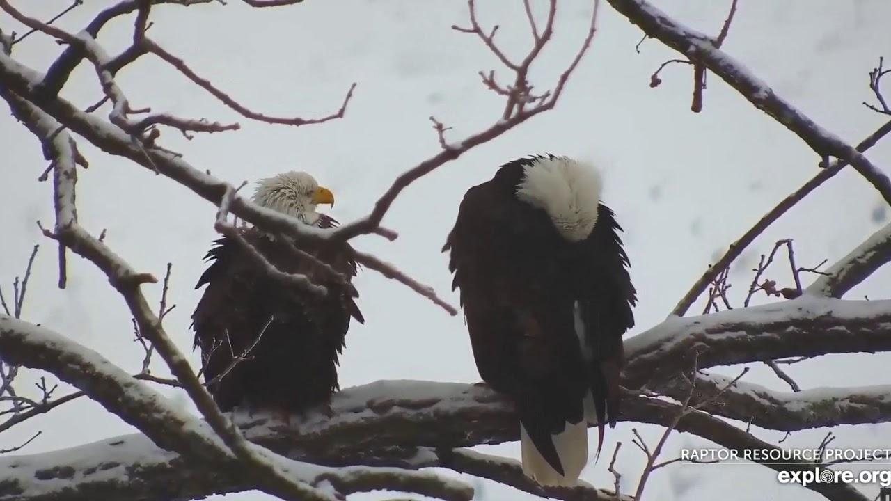 decorah eagles live cam 2020
