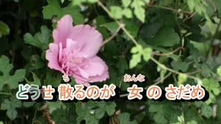 三沢あけみ - 南国の花