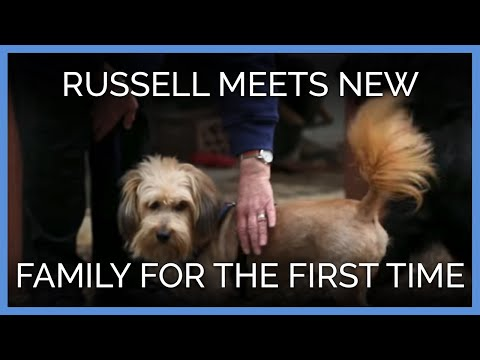Twice Attacked Dog Meets New Family for the First Time