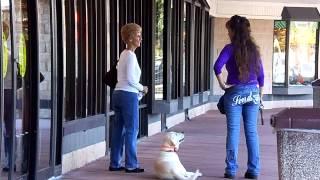 E Collar Training Labrador Stella Dog Aggression Issues Off Leash Remote Dogtra