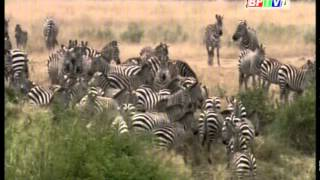 Video | Động vật hoang dã | Dong vat hoang da