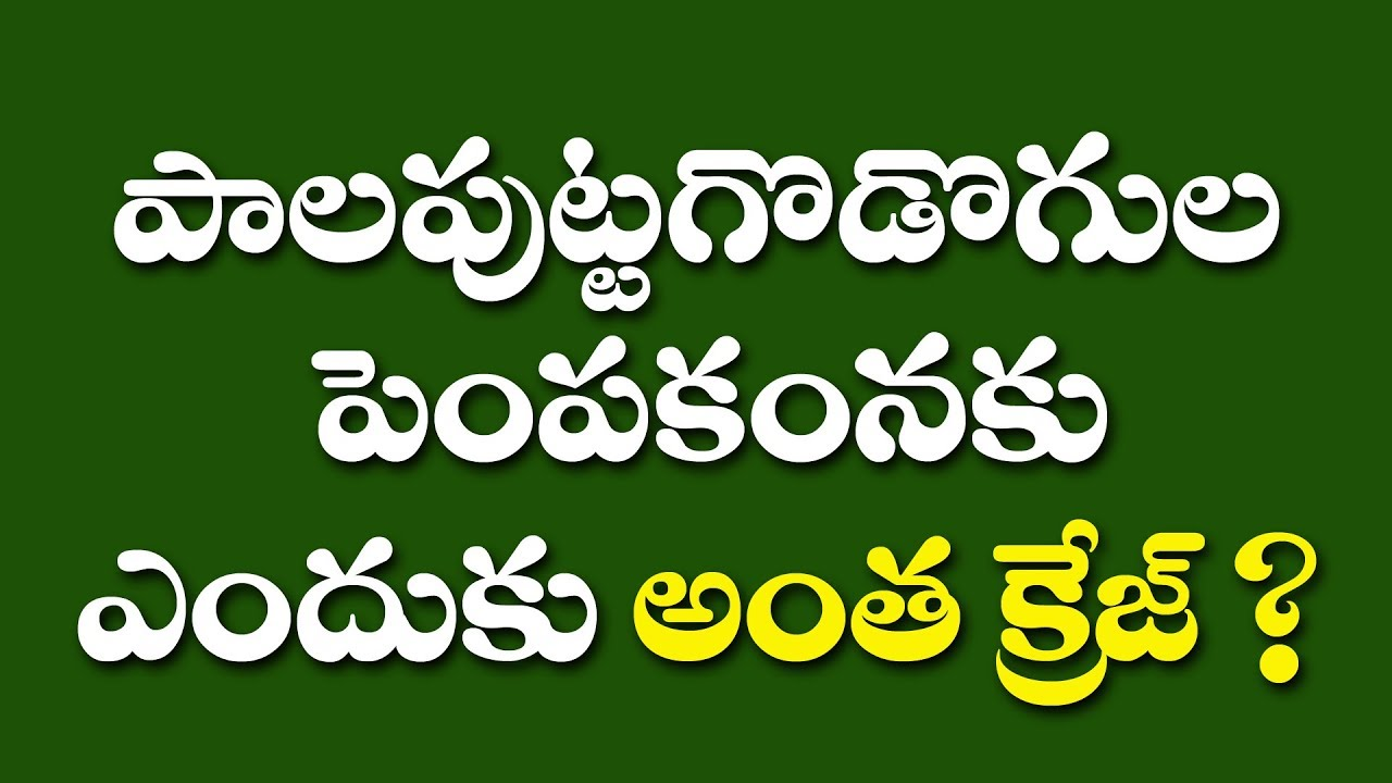 milky mushroom cultivation in telugu || why milky mushrooms cultivation  have lots of craze