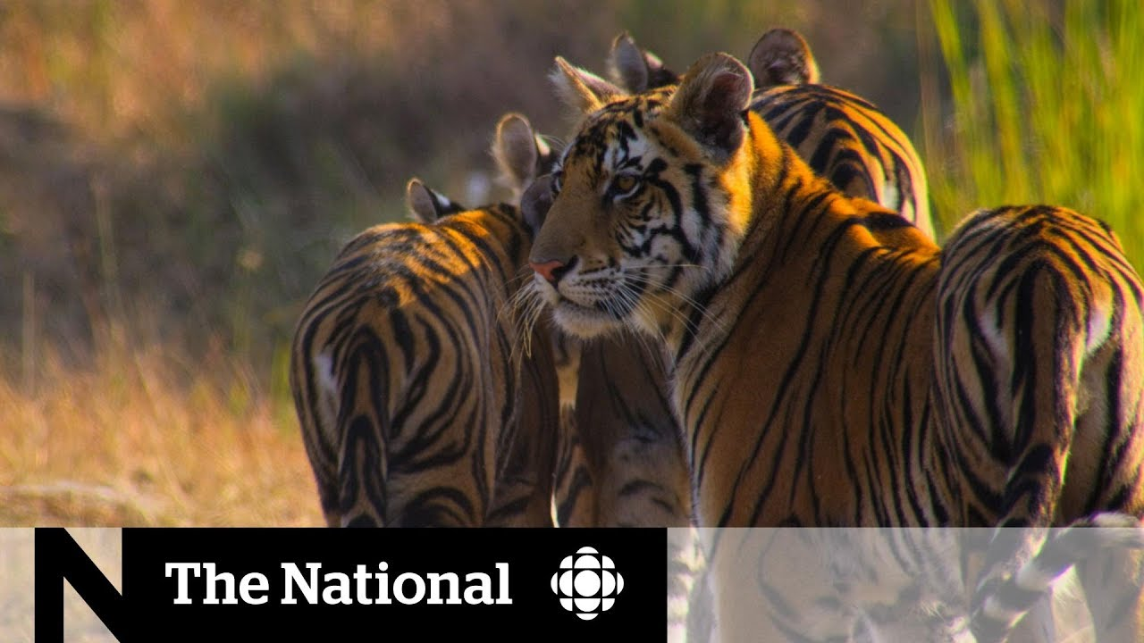 Nature documentaries inspire climate change activism