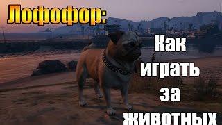 GTA 5 - Как играть за животных (Лофофор#14,15)