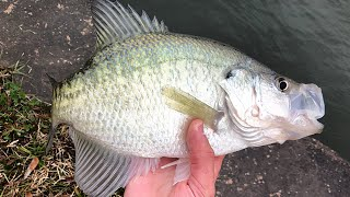 Catching WINTER CRAPPIE right off the BANK!!