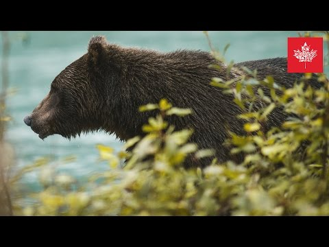 🇨🇦 British Columbia Kanada Fotografie Reise Dokumentation 📷  Benjamin Jaworskyj