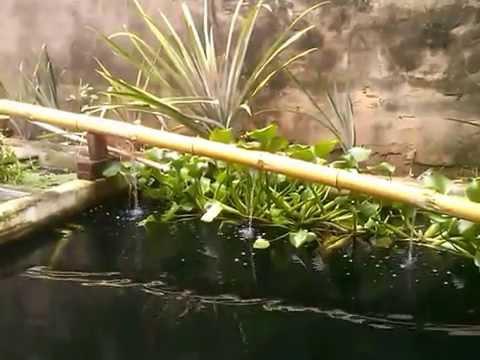 Como fazer cascata de bambu para estanques e lagos artificiais com custo Zero simples e facil.