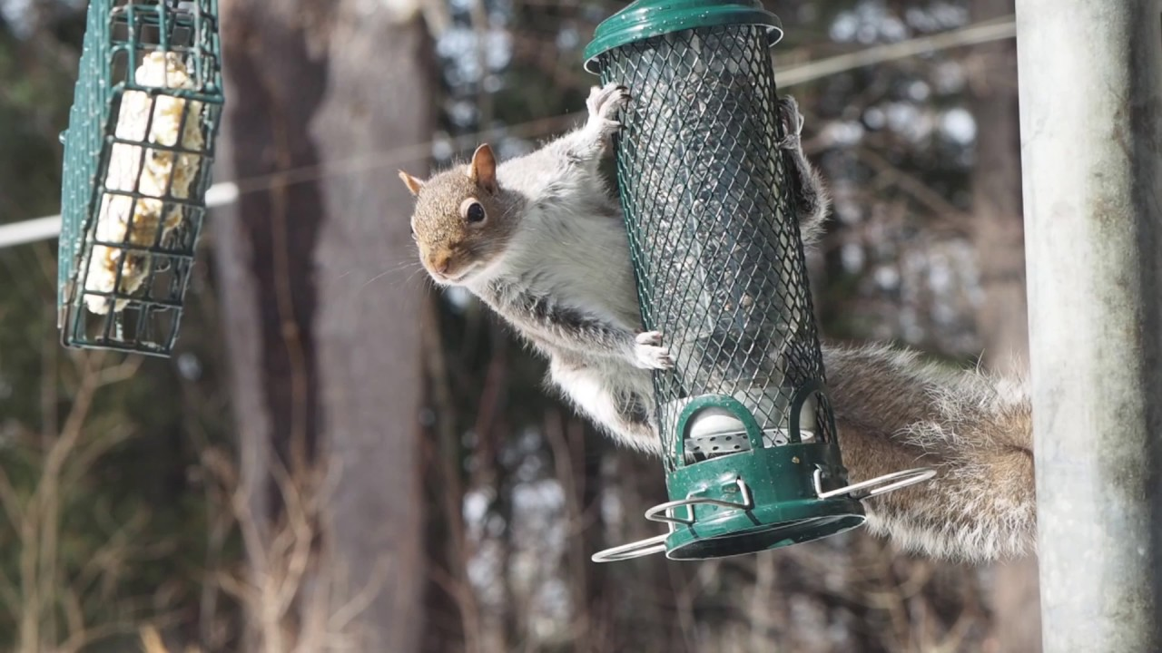bird watch brome feeder in classic review epicreviewguys proof squirrel buster cc