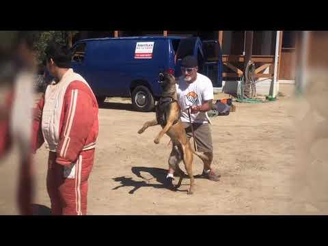 America's Best Dog Trainer Youth Development Program