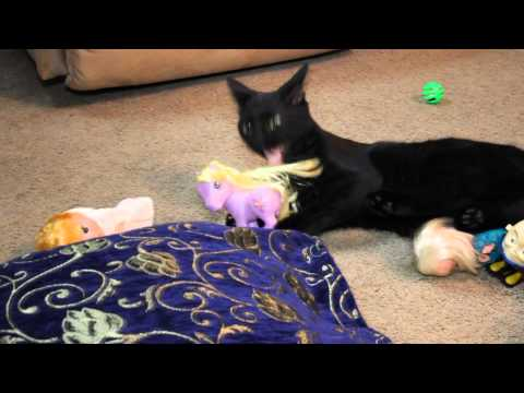 Funny Kitty Cat Rolls in Toys