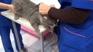 Старому поющему коту расчесывают колтуны