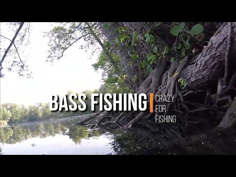 BASS FISHING Italy  ( Texas Rig)