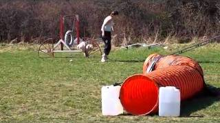 Agility training and competition